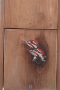 d-Woodpecker - Birdhouse - Acryl on wood